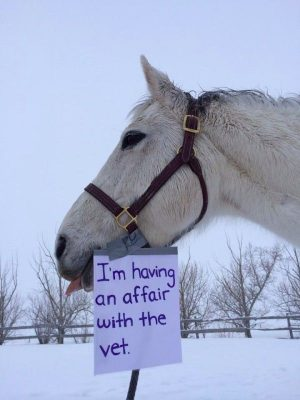 Horse Shaming – Album on Imgur. Good for you no body better then your…