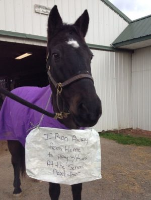 My Horse, The Escape Artist… presented by Five Star Tack   Horse Junkies United
