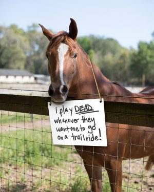 What does your horse do when they're naughty? #HorseShaming… #HorsesbeingHorses #PurinaFed #FeedGreatness #PurinaHorseFeed