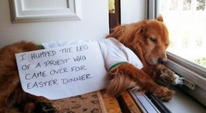 2020 Dog Shaming Calendar Is Here!