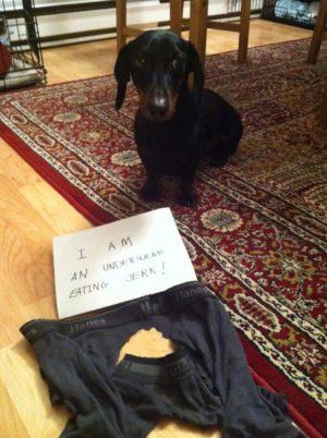 Hilarious dog shaming – Pictures – CBS News