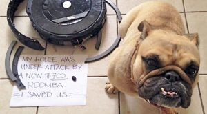 "There is a new internet hype with Doggies involved. It is called ""Dog Shaming"".…"