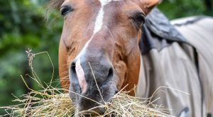 Top 15 Silliest Places You Find Horse Hay – COWGIRL Magazine