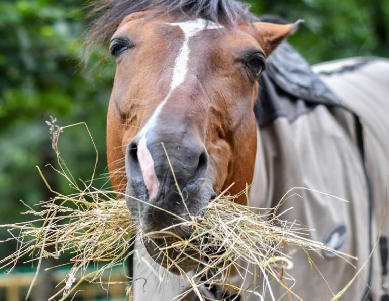 The How and Why of Soaking Hay | Horse Journals