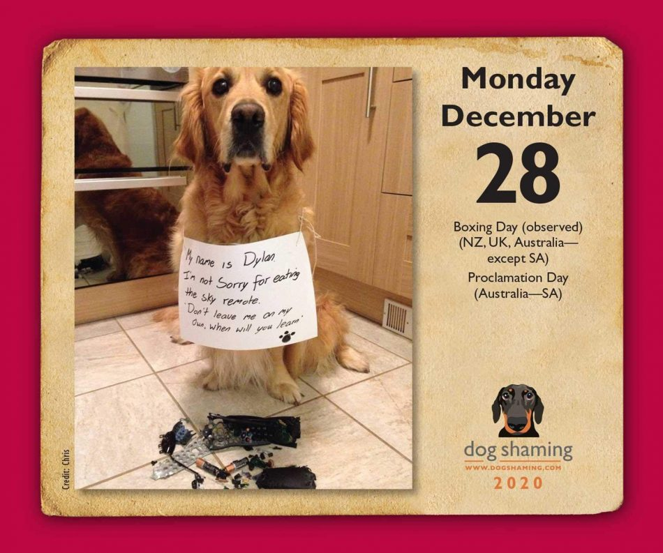 Lemire, P: Dog Shaming 2020 Day-to-Day Calendar #Ad #Shaming, #Dog, #Lemire, #Calendar