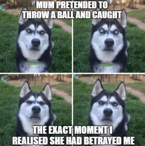 50 Funny Husky Memes That Will Keep You Laughing For Hours #husky #huskymemes #dogmemes…