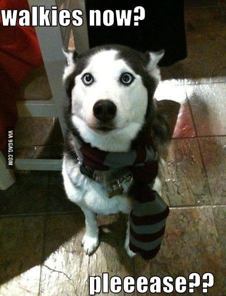 This is why I have to miss some school days. – Funny Husky Meme…