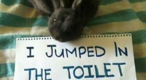 15 Incredibly Funny and Cute Bunny Memes