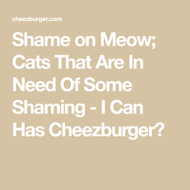 Shame on Meow; Cats That Are In Need Of Some Shaming – I Can…
