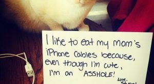20 Hilarious and All New Cat Shaming Photos You Have To See