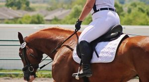BodyShaming in the show ring – its time to change the conversation –