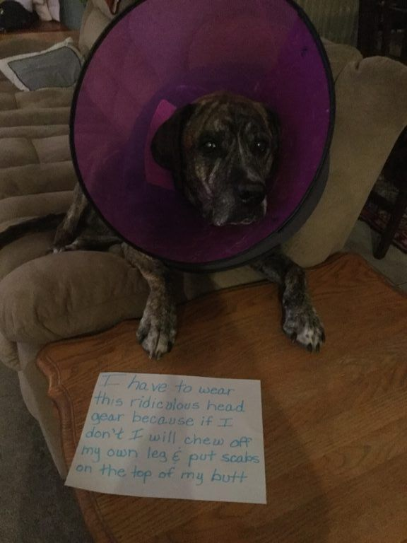 Shame Your Pet | Dog Shaming • Cat Shaming | Shame Your Pet