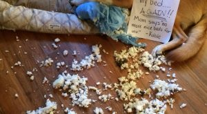 """I tore apart my !! Mom says 'no more nice beds for me'. -Kahle""…"