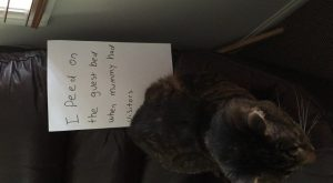 20 Hilarious and All New Cat Shaming Photos You Have To See – I…