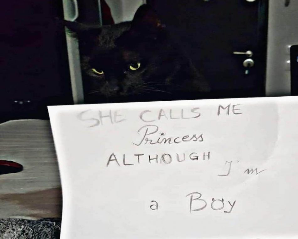 5 Cats Shaming Their Owners for a Change