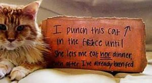 These Are The Funniest Cat Shaming Photos On The Internet
