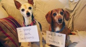 30 Times People Shamed Their Pets In The Most Hilarious Way – I Can…