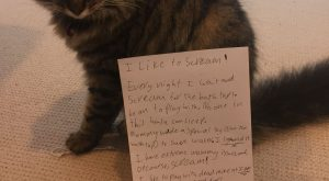 #catshaming #cat shaming #cat #funny cats #scream #animal shaming