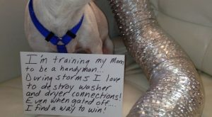 """I'm training my Mom to be a handyman, During storms I love t destroy…"