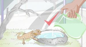 3 Ways to Teach a Bearded Dragon to Drink from a Water Bowl