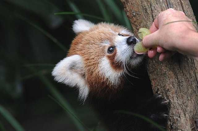 It's RPM and I haven't seen a single red panda yet and it's almost…