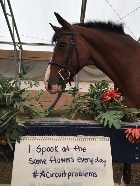 Horse Shaming, april clay, horse rider psychology, equine psychology, horse psychology