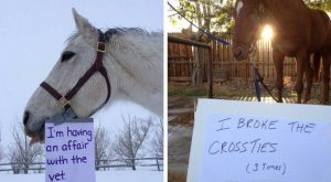 12 Horse Shaming Photos That Will Make You Say 'Naughty, Naughty'