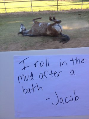 """Horse shaming. """" I roll in the mud after a Bath"""" So Tuffy"""