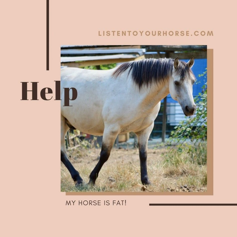 Help! My Horse is Fat