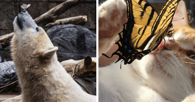 Rare Moments: Animals With Butterflies On Their Noses