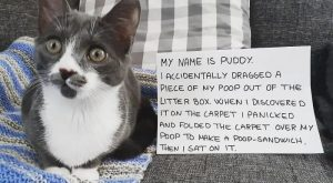 Pet Shaming At Its Finest (40 Pics)