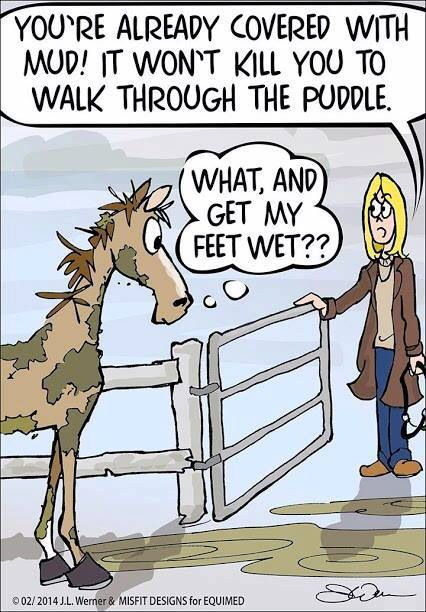 """Muddy Horse """"What!?! And get my feet wet"""""""