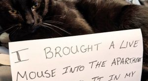 Pet Shaming At Its Finest (40 Pics) – I Can Has Cheezburger?