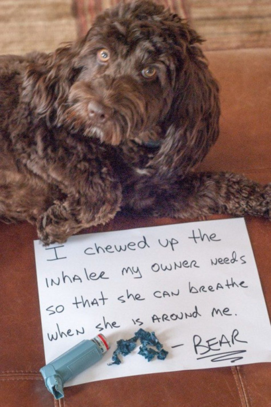 15 Hilarious Instances Of Dog-Shaming