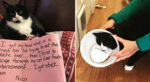 Determined Cat Lil Bub Travels For Food Despite Her Condition – I Can Has…