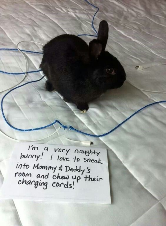 21 Bunnies That Might Or Might Not Be Shameful For What They Did -…