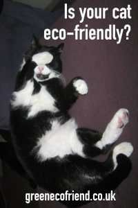 Is your cat eco-friendly?