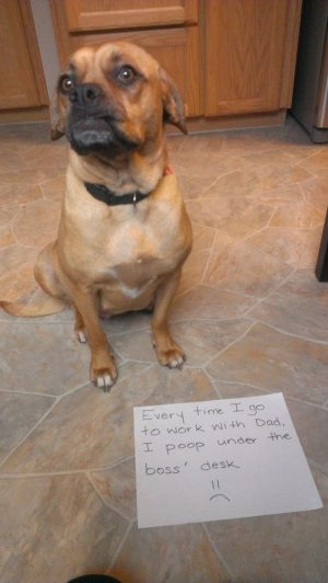 10 Dogs Who Are Passive-Aggressive Poopers | 5 | – Three Million Dogs
