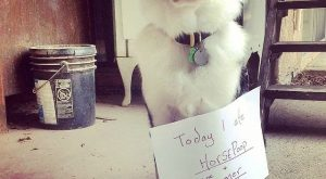 Even the best dogs have their moments. It's time #HanktheCowdog had some due #dogshaming…