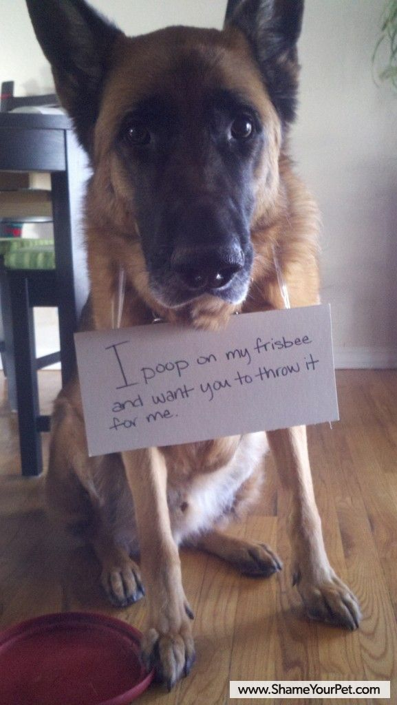 Shame Your Pet | Dog Shaming & #8226; Cat Shaming | Shame Your Pet
