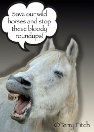 mailto:info@ – A HORSE SLAUGHTERHOUSE is slated to open in Roswell, NM