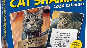 Cat Shaming 2020 Desk Calendar