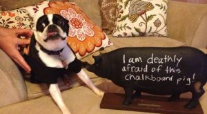 I am deathly afraid of this chalkboard pig!
