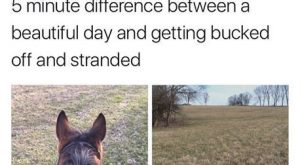 #horseriding #horserider #equine pretty much