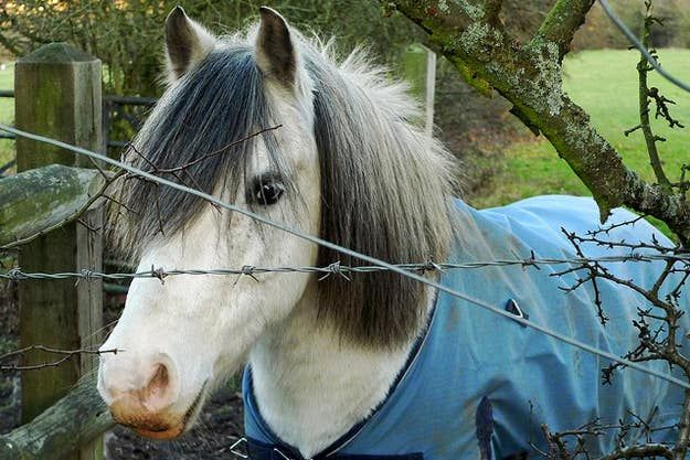 20 Horses With Better Hair Than You