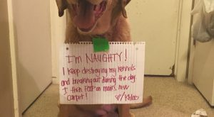 Lol naughty dog