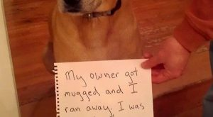 My owner got mugged and I ran away. I was fine, thanks
