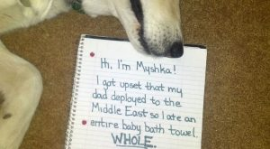 Hi, I'm Myshka!  I got upset that my dad deployed to the Middle East…
