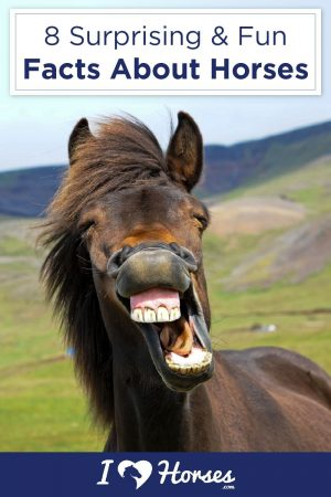 Why We Mount On The Left  Other Fun Horse Facts