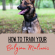 Belgian Malinois Training: Everything You Need to Know
